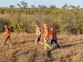 Texas Pheasant Hunts