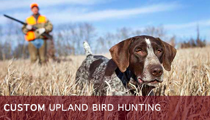 Texas Quail, Chukar, and Pheasant Hunts in Dallas/Ft. Worth